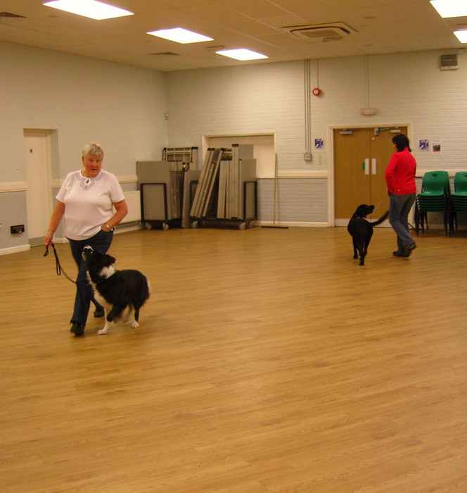 #1 Best Puppy Training Classes Near Me In France